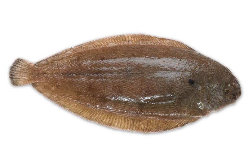 morskiezikohl